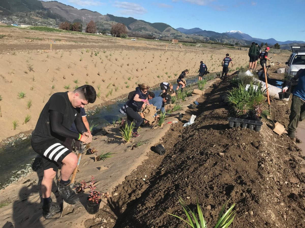 Community Collaboration To Plant Our Stormwater Reserve
